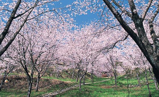 桜御陵「阿彌陀浄苑」
